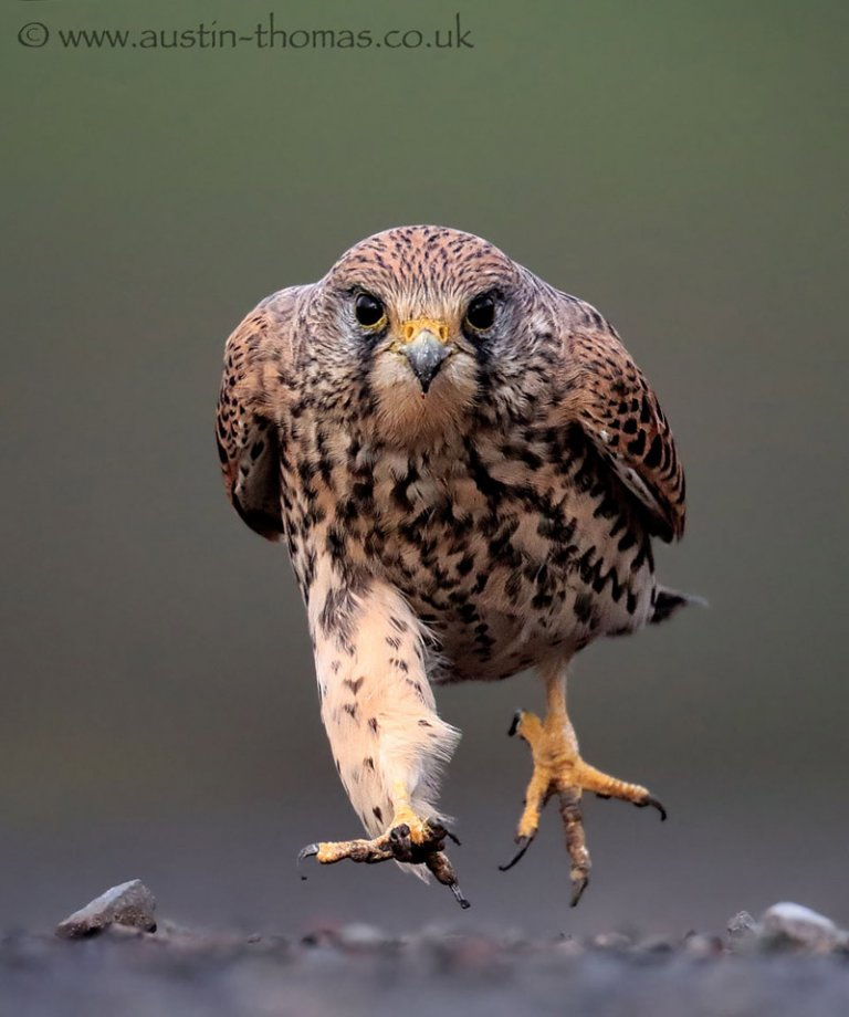 BIRDGUIDES — PHOTO OF THE YEAR 2014