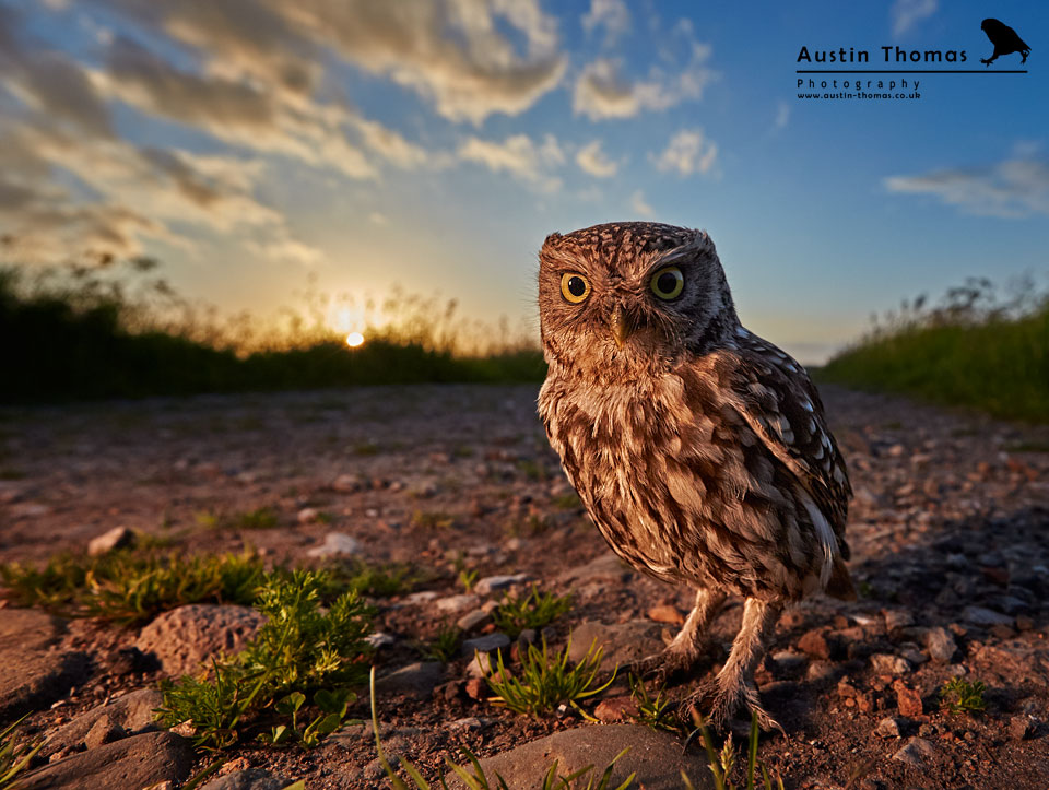 Wide Angle Photography - Little Owl with Flash